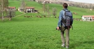 Man hiking to cows herd looking for photos. Following behind.Real people Millennial traveller backpacker adult male. Photographer walking on rural field to stock video