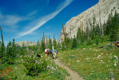 Man Hiking with Two Llamas High Alpine Mountain Trail Royalty Free Stock Images