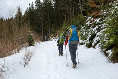Man is hiking in winter forest on cloudy day Stock Photography