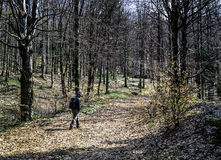 Man Hiking in the Woods Stock Photography