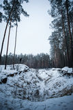 Man on hill in winter forest Stock Photography