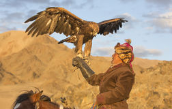 Man with his Altai Golden Eagle. Bayan Ulgii, Mongolia, October 2nd, 2015: Man with his horse and Altai Golden eagle at sunset Stock Photo