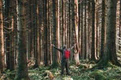 A man with his arms out stretched in a beautiful pine forest on a sunny winters day, Elan Valley, Wales, UK royalty free stock image