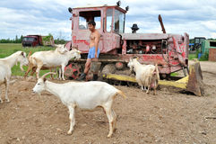 A man in his boxers feeding goats. Stock Photography
