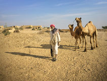 Man With His Camels in Thar Desert. Just outside Jaisalmer, Rajasthan, India Royalty Free Stock Photos