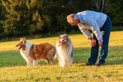 Man with his collies Royalty Free Stock Photos