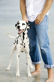 A man with his dog on a beach royalty free stock photos