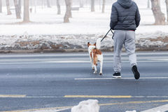 Man and his dog crossing street Royalty Free Stock Images