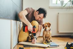 Man and his dog doing renovation work at home. Man doing renovation work at home together with his small yellow dog Stock Images
