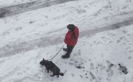 Man with his dog in the snow. Stock Images