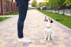 A man and his dog are walking in the park. Sports with pets. Fitness animals. The owner and Jack Russell are walking down the stre royalty free stock photo