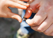 A man in his hand holds a deer beetle. A child's hand touches th stock photo