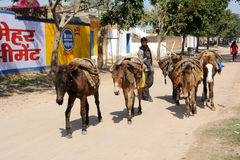 Man with his herd of horses on the street Royalty Free Stock Photo