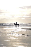 Man and his horse on the beach Stock Photography