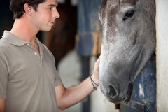 Man with his horse. At the stables Stock Image