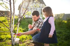 Whitewash of the tree trunk, little girl and her father working. Royalty Free Stock Photography