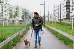 A man and his little dog are practicing `walking to heel` in the park stock images