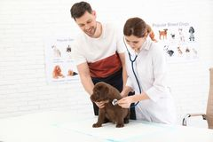 Man with his pet visiting veterinarian. Doc examining Labrador puppy. Man with his pet visiting veterinarian in clinic. Doc examining Labrador puppy stock image