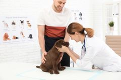 Man with his pet visiting veterinarian. Doc examining Labrador puppy. Man with his pet visiting veterinarian in clinic. Doc examining Labrador puppy stock images