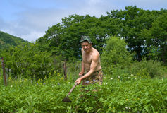 Man with Hoe 1. A man weeds garden-bed with hoe Royalty Free Stock Photo