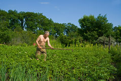Man with Hoe 7. A man weeds garden-bed with hoe. Summer Stock Photography