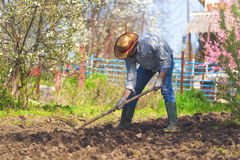 Man hoeing vegetable garden soil. New growth season on organic farm Royalty Free Stock Photography