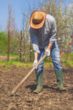 Man hoeing vegetable garden soil. New growth season on organic farm Royalty Free Stock Image