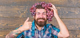 Man hold grapes wooden background. Farmer bearded guy with homegrown harvest grapes put on head. Farmer proud of grapes. Harvest. Fresh organic harvest. Grapes royalty free stock images
