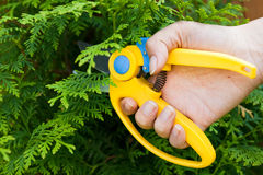 Man hold in hand plastic garden clipper Royalty Free Stock Images