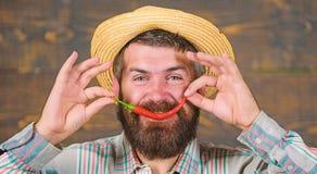 Man hold pepper harvest. Bearded farmer hold chilli red pepper in hand. Farmer presenting hot chilli pepper wooden. Background. Pepper harvest concept. Rustic stock photos