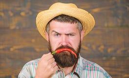 Man hold pepper harvest. Pepper harvest concept. Bearded farmer hold chilli red pepper in hand. Farmer presenting hot. Chilli pepper wooden background. Rustic stock images