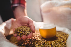 Man holding barley by beer glass in sack at brewery Royalty Free Stock Photo