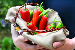 Man holding a basket full of red. And green peperoni, enhanced Royalty Free Stock Image