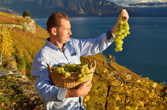 Man holding a basket of grapes Stock Photography