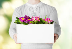 Man holding big pot with flowers Stock Photos