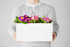 Man holding  big pot with flowers Royalty Free Stock Photos