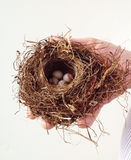 Man holding bird nest with eggs Stock Photos