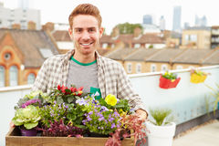 Man Holding Box Of Plants On Rooftop Garden Royalty Free Stock Image