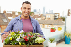 Man Holding Box Of Plants On Rooftop Garden Royalty Free Stock Photos