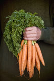 A man holding a bunch of carrots Stock Images