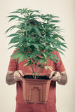 Man holding Cannabis pot Stock Image