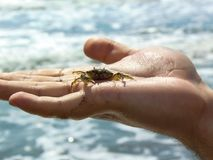 A man holding a crab in his hand. stock photos