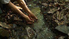 A man holding crabs from a forest stream, Myanmar. Extreme close-up high-angle tilting shot of a local man holding two crabs on his hand at a shallow-water stock video