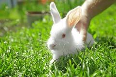 Man holding cute little rabbit. On green grass Stock Photography