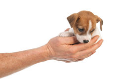 Holding cute puppy in hands Stock Photos