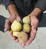Man holding figs Royalty Free Stock Photography