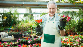 Man holding flower pots Stock Photography
