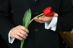Man Holding Flowers. Red tulip Royalty Free Stock Photos