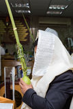 Man holding the four species in the synagogue. Sukkot Stock Images