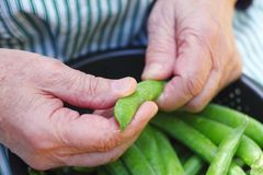 Shelling peas in a colander Royalty Free Stock Photos